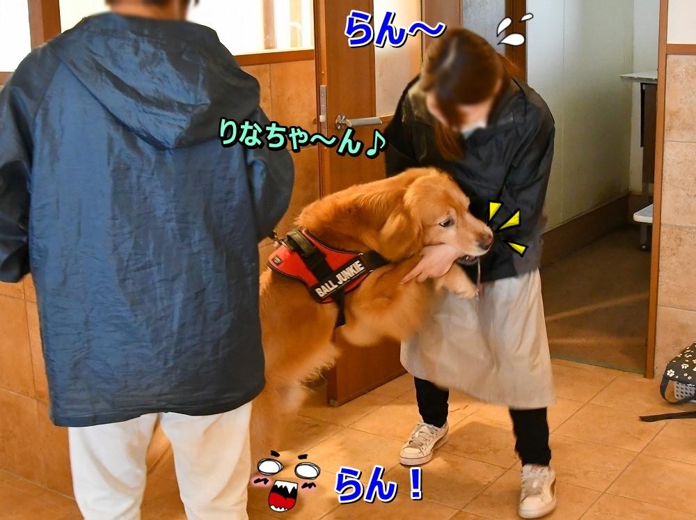 DSC_7698わ~!りなちゃ~ん