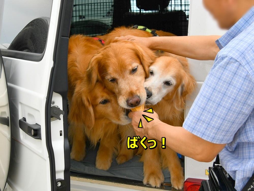 DSC_7749ばくっ