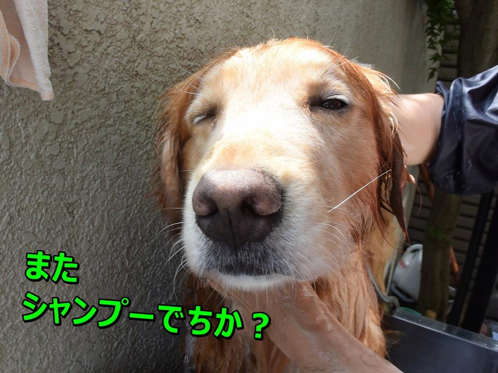DSC_9644e~またしゃんぷー?