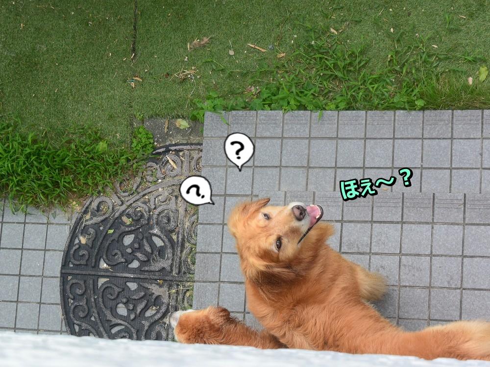 DSC_9685あんれ~?