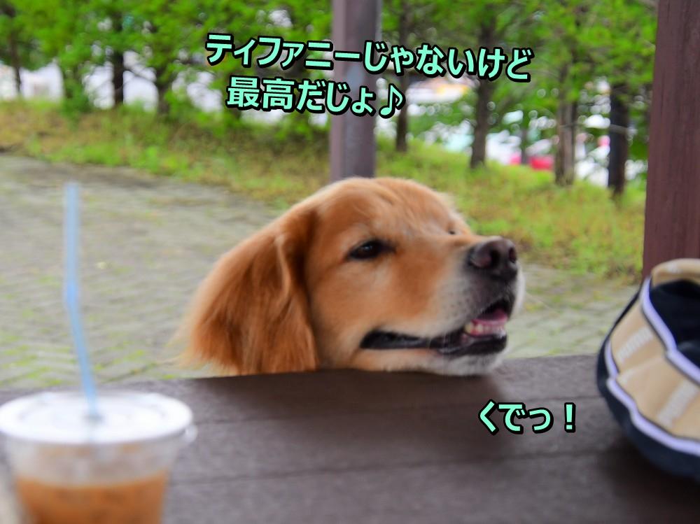 DSC_7789お裾分けおねが=い