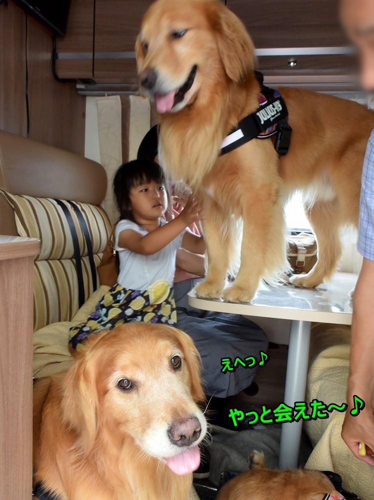 DSC_9935お姉ちゃんぶってるアオ