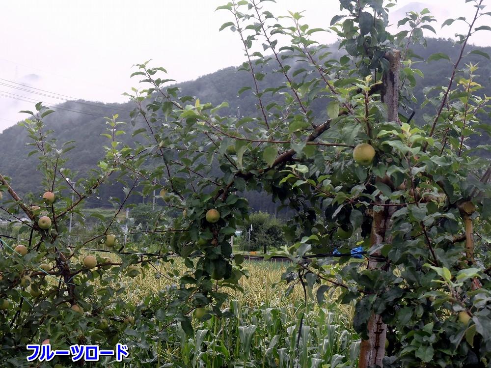 DSC_9976リンゴ畑のフルーツロード