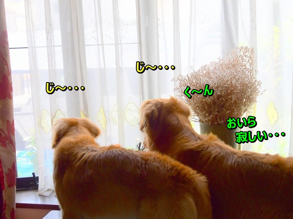 DSC_8562じ~・・ク~ん寂しいじぇ