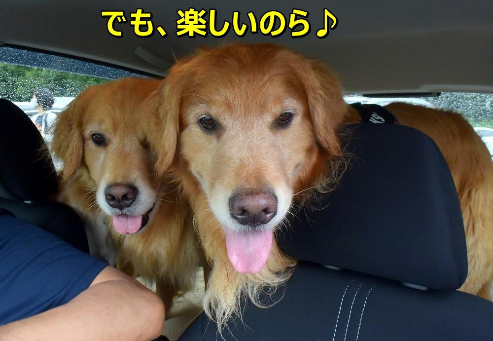 DSC_0049ぎゅ~ぎゅつ~詰めだけど