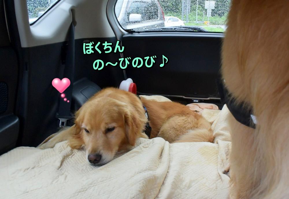 DSC_0051ぼくちんのびの~び