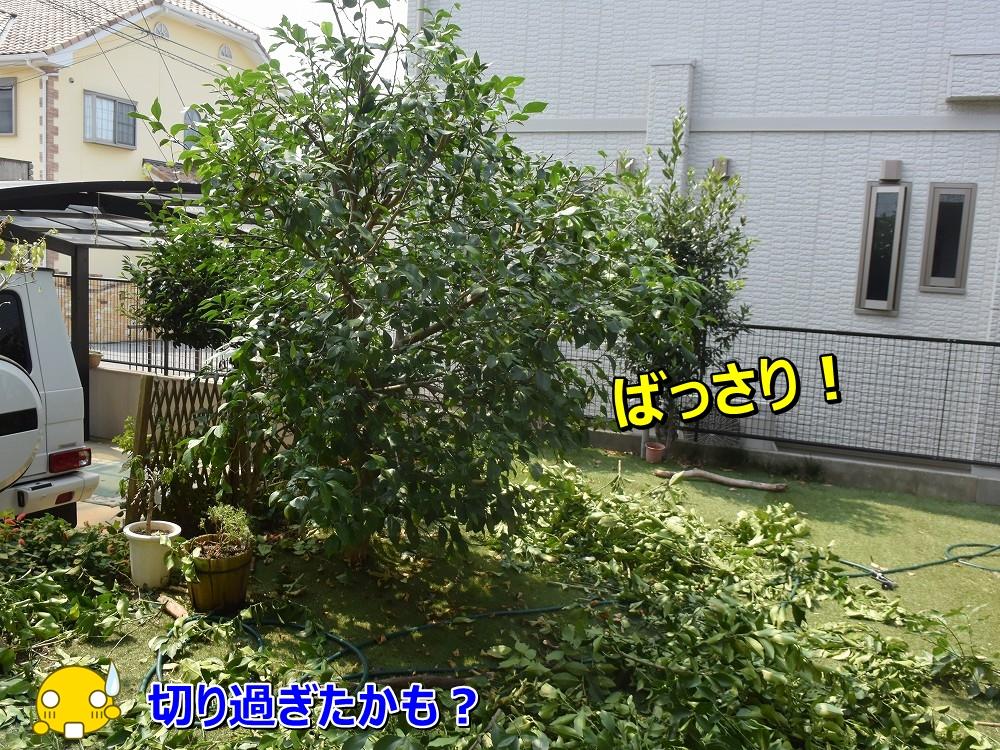 DSC_0092ばっさり