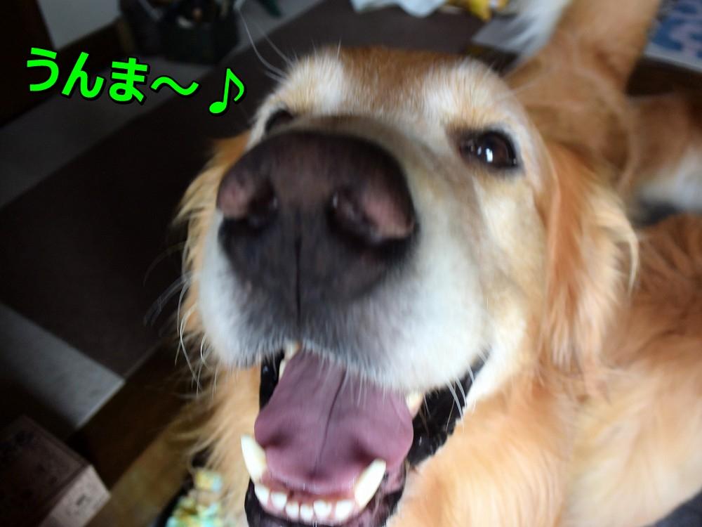 DSC_0106うんま~