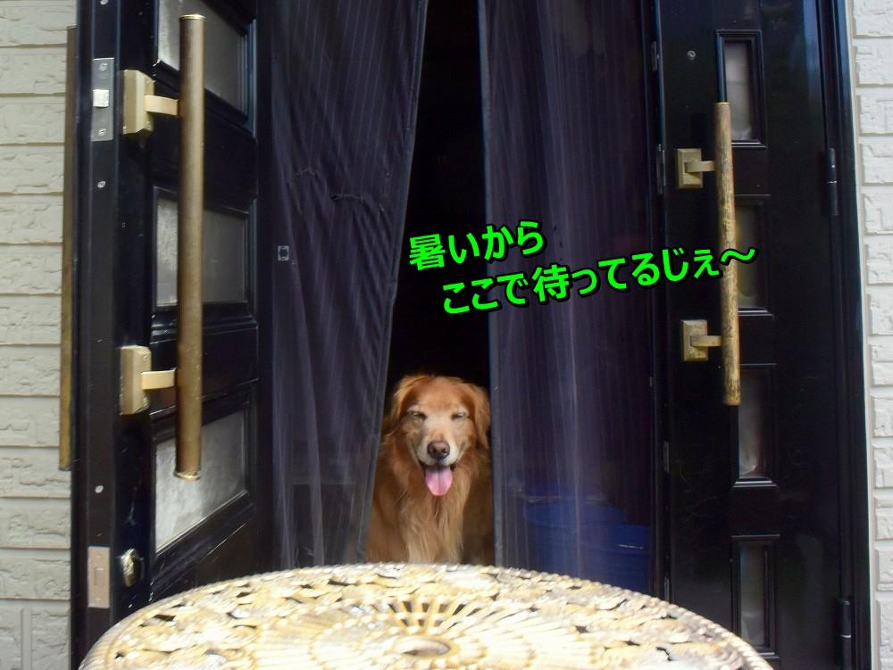 DSC_0141あじ~
