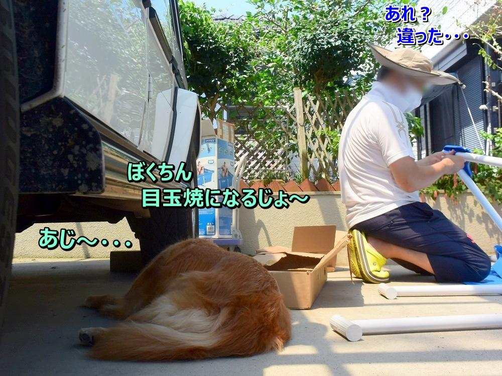 DSC_0194ヴィっちゃん日陰