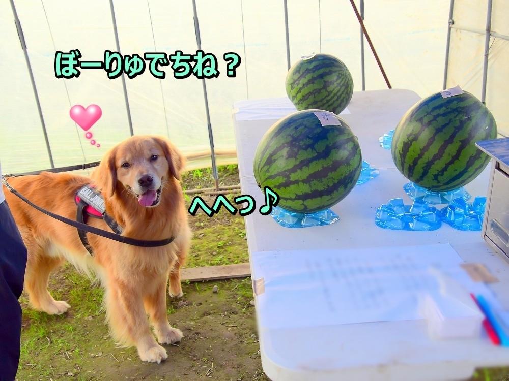 DSC_8224ぼーりゅでちね