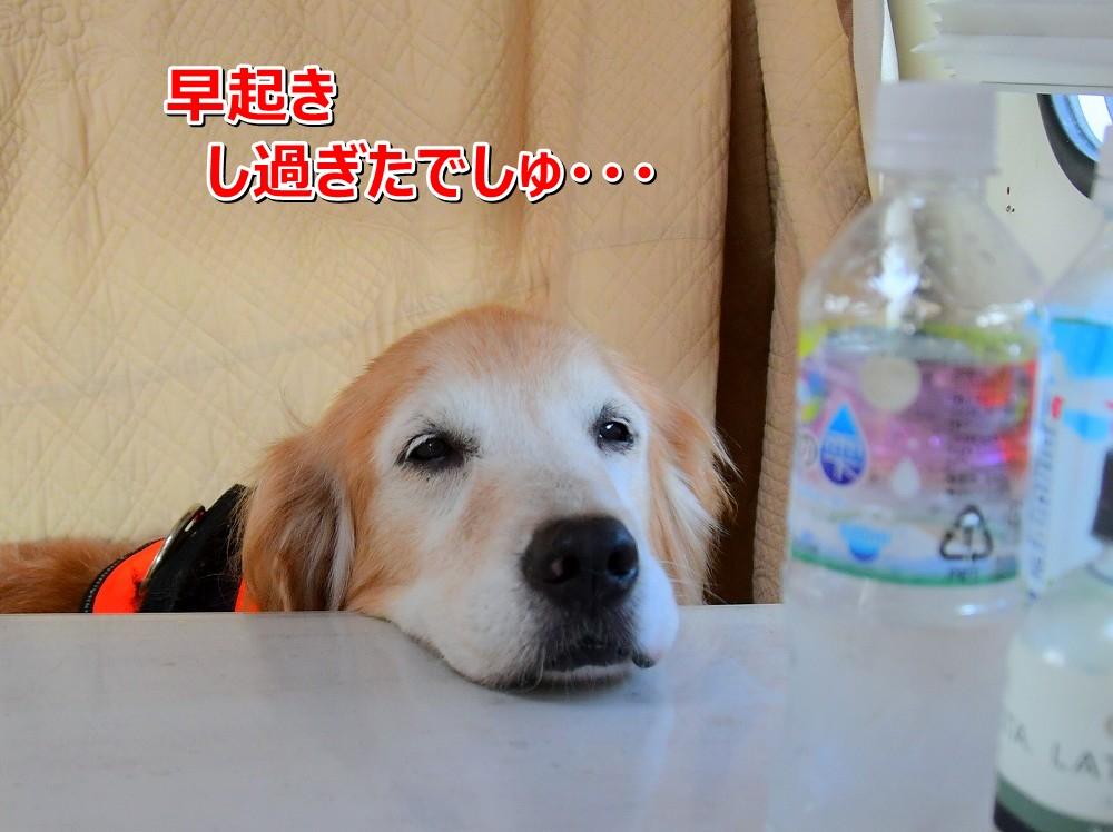 DSC_8292アオちゃん、まだ寝てるの?