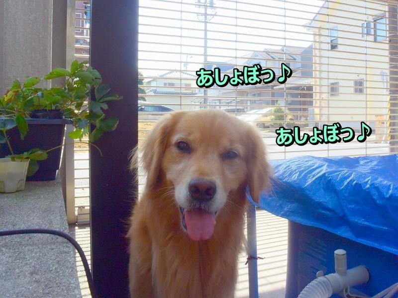 DSC_0281あそぼ!