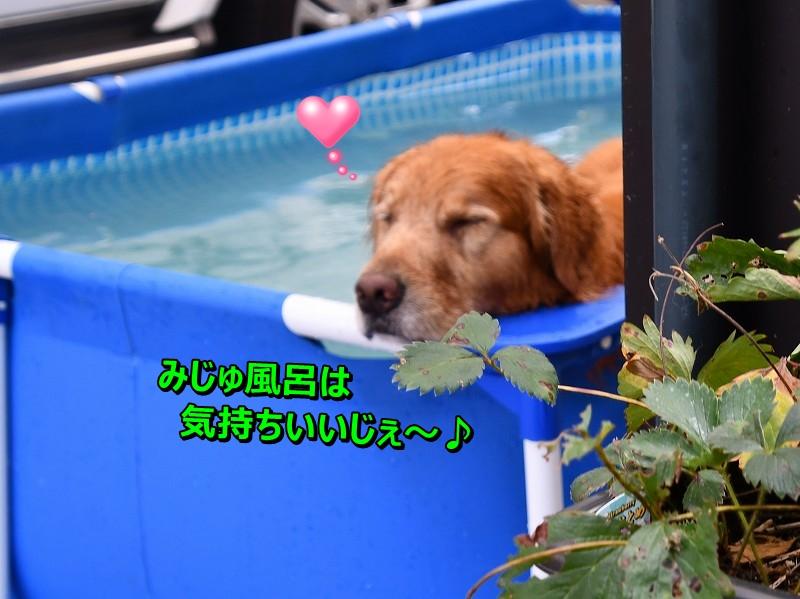 DSC_8634いい湯でちね~ うとうと