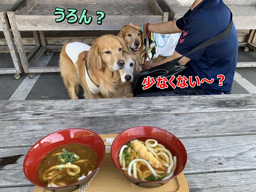 S__9003092お昼ご飯?