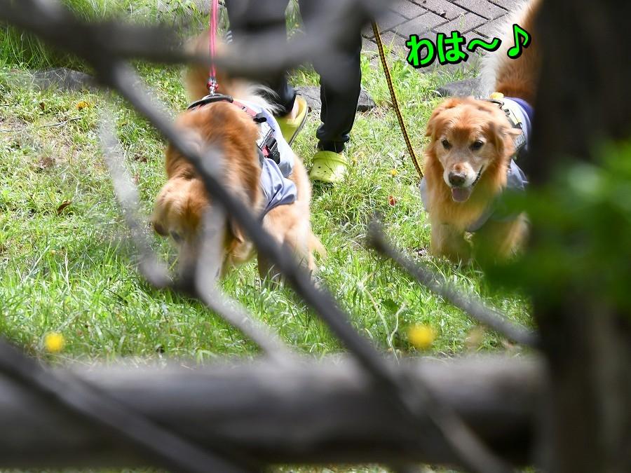 DSC_9493こっちだじぇ~