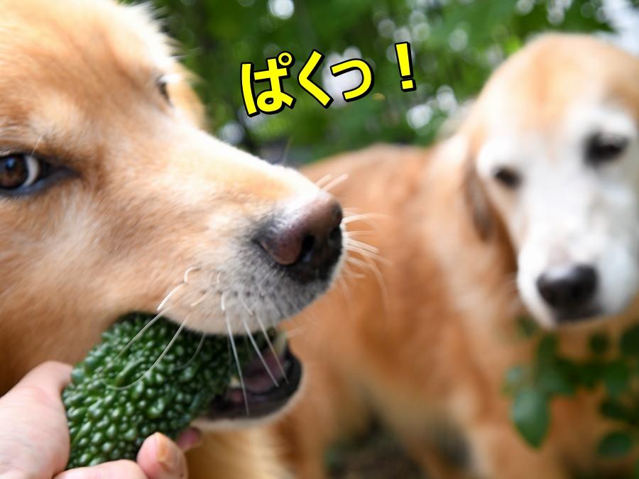 DSC_9019ぱく~