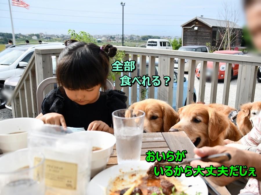 DSC_9915アオちゃん 食べれなかったらおいらがいるじぇ