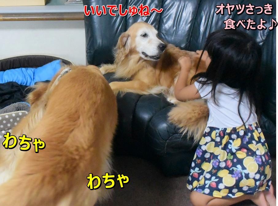 DSC_0390ヴィヴィ可愛い~