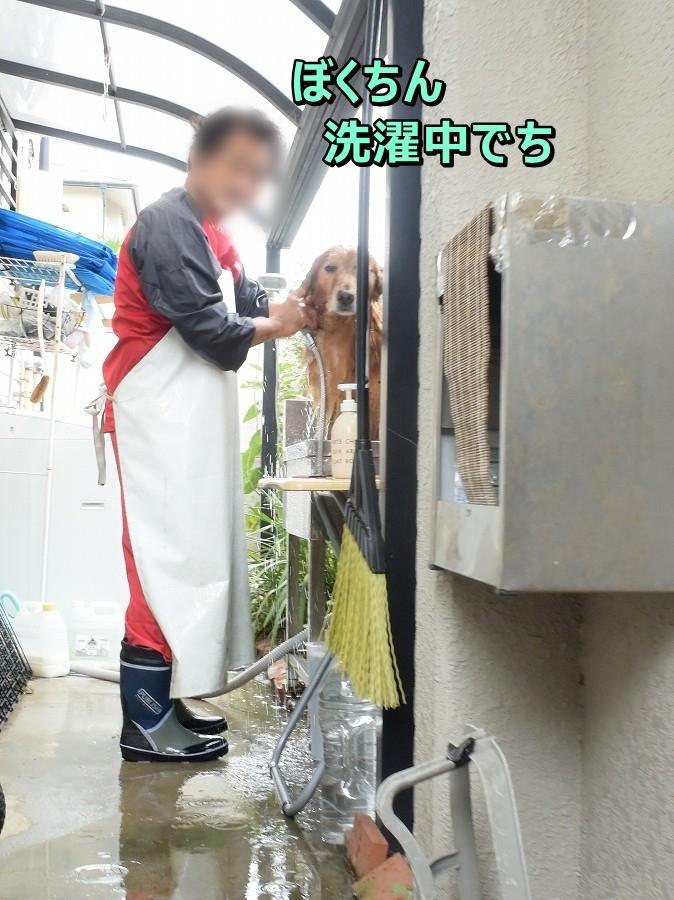 DSC_0416おいら洗濯中