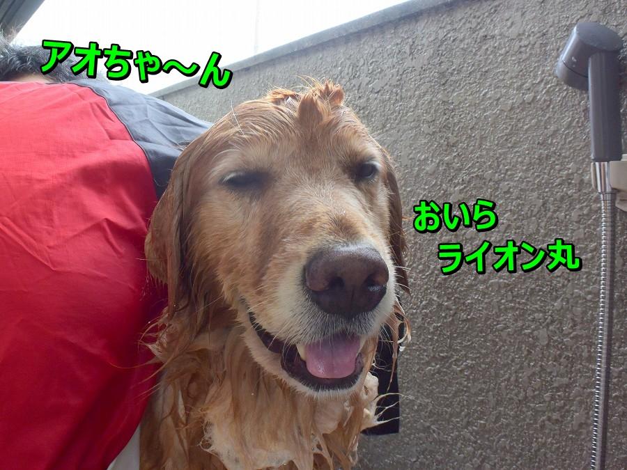DSC_0433おいらライオン丸