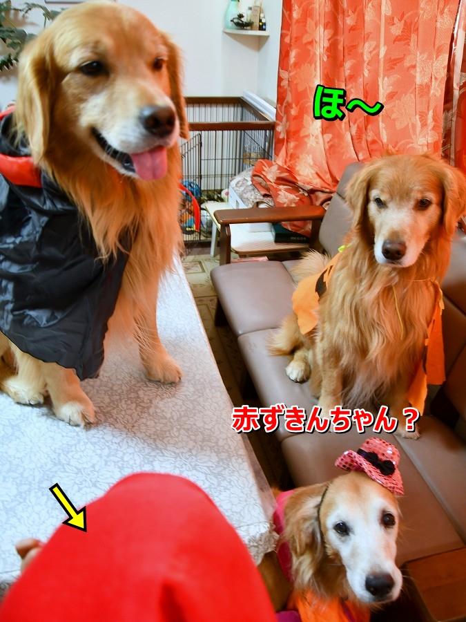 DSC_1598アオちゃんは赤ずきんちゃんでちか