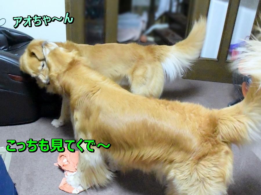 DSC_0516アオちゃん こっちも見て~