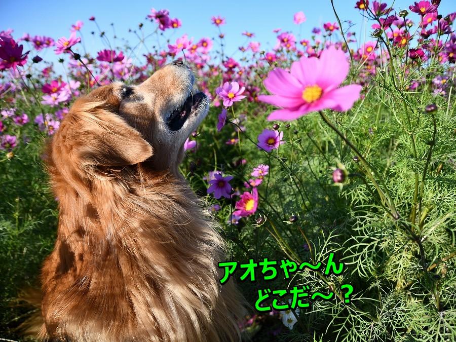 DSC_1847アオちゃ~ん