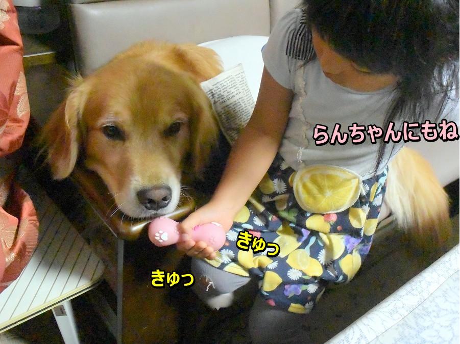 DSC_0845らんちゃんにもね きゅきゅ