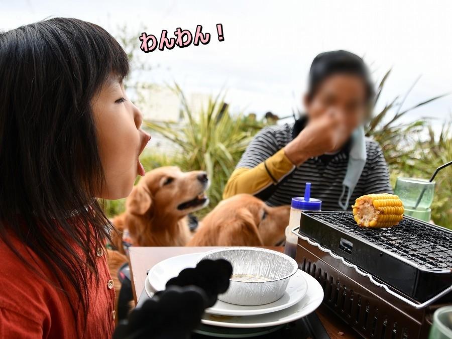 DSC_2822ワンワン