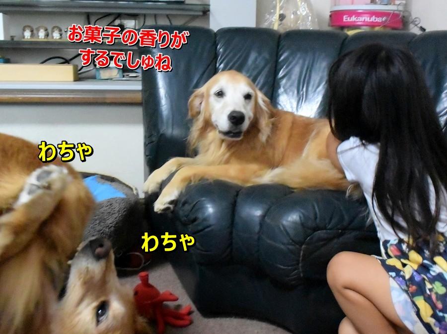 DSC_0388_20201022200913210.jpg