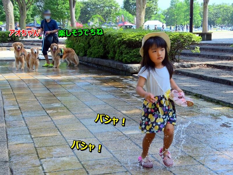 DSC_8370_2020082919235173a.jpg