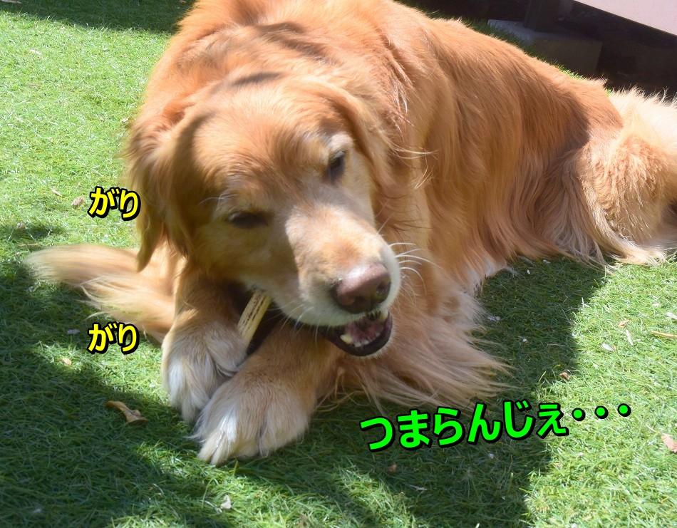 DSC_8541_2020032823145579e.jpg