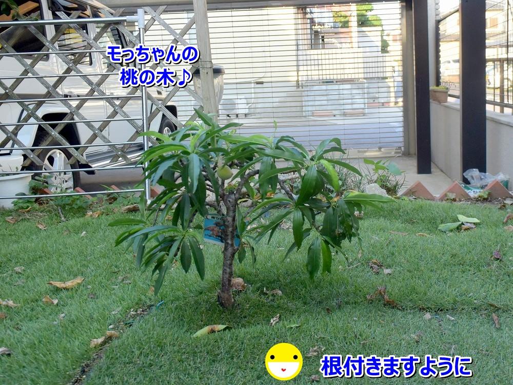 DSC_9146_20200630112943246.jpg