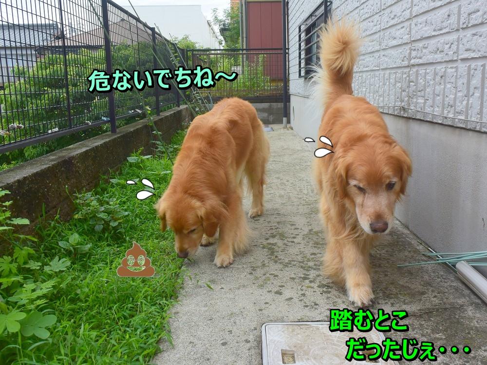 DSC_9401_20200722165930c0a.jpg