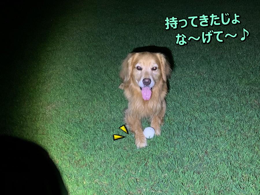 S__11714574.jpg