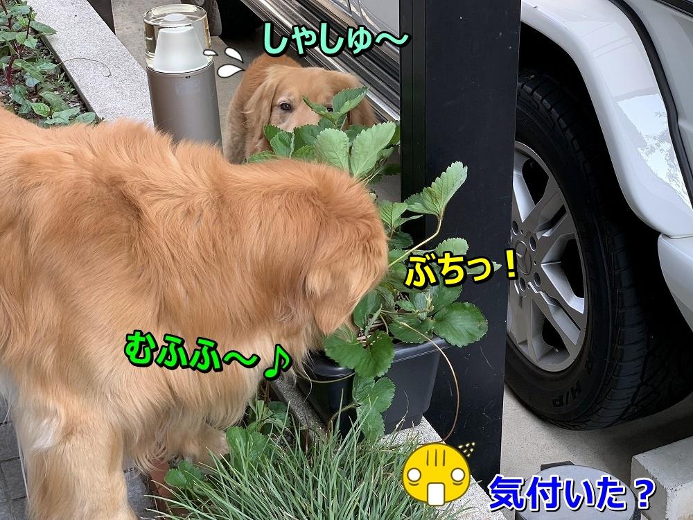 S__8364272.jpg
