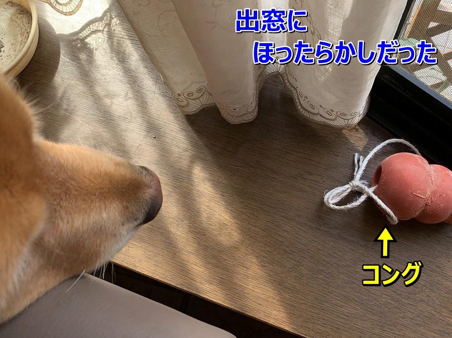 S__9003055.jpg