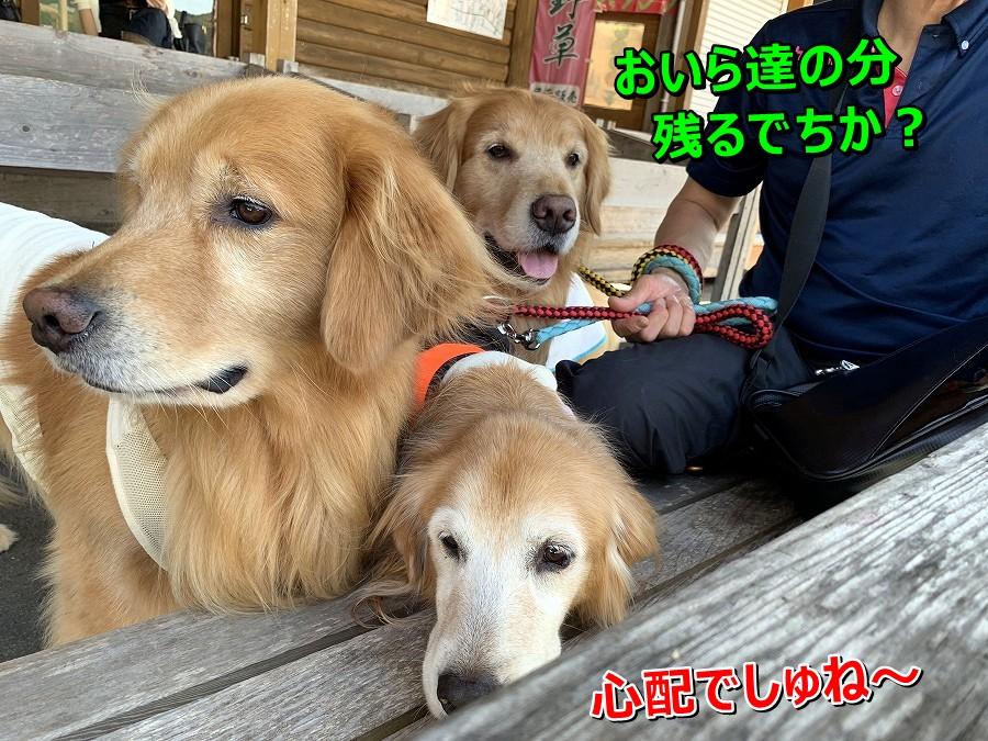 S__9003094.jpg