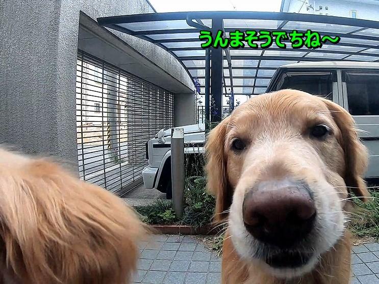 Snapshot_16.jpg