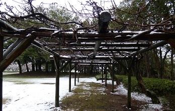 3-1埼玉古墳公園風景
