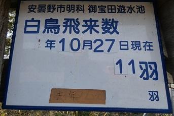 御宝田遊水池11羽20201027-1