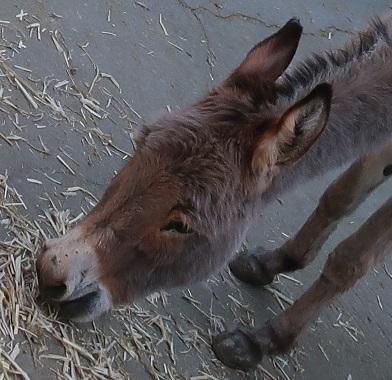 宇都宮動物園 ロバ