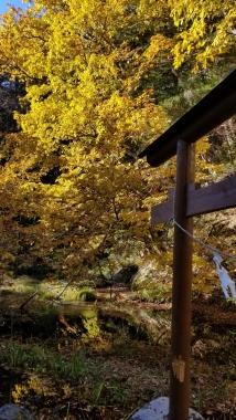 10月27日黄葉