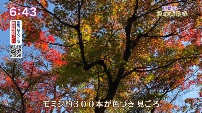 20201119-191916-600.jpg