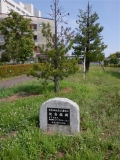 JR新発田駅 新発田駅前公園竣工記念植樹