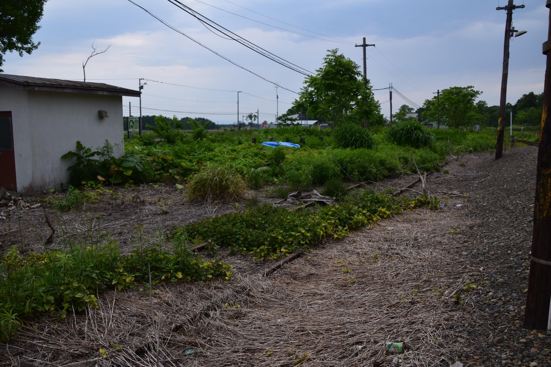 Nakagoya15.jpg