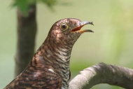 k_birder