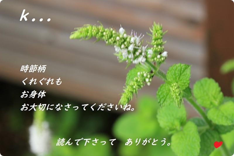 ミントの花グリーティング
