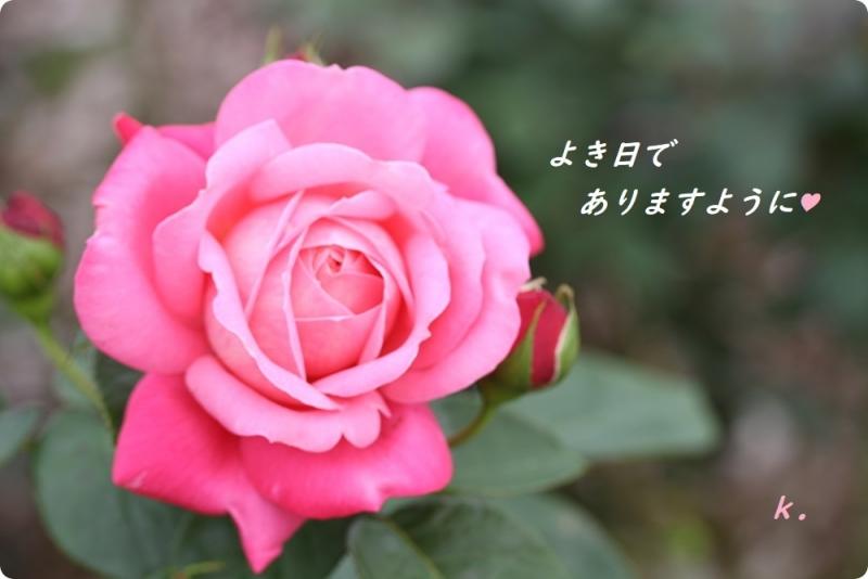 グリーティング 公園のバラ